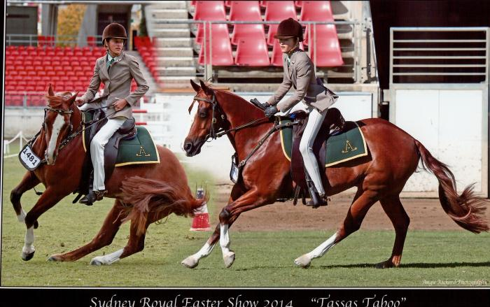 Truly Talented All Round Stock Horse