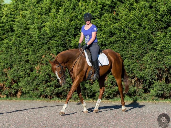Beautiful Chestnut TB Mare 16YO
