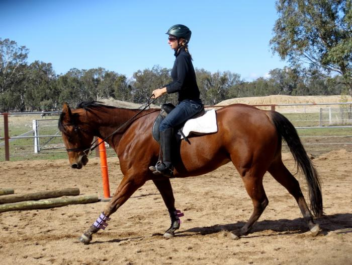 4 yr old Gelding with loads of potential