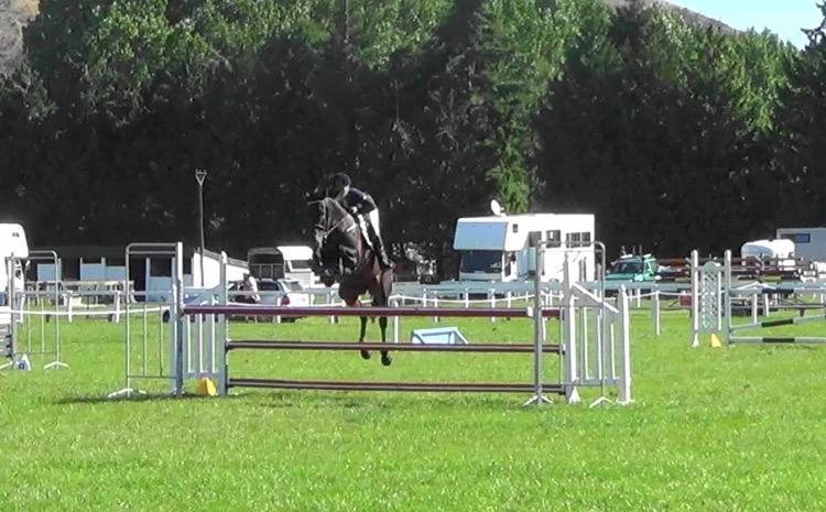 Serious Eventer/Show Jumper