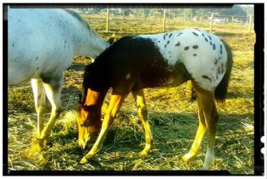 Her latest colt foal