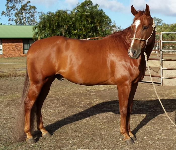 Imflammable Q-60621 2006 IMP Bloodlines Geld