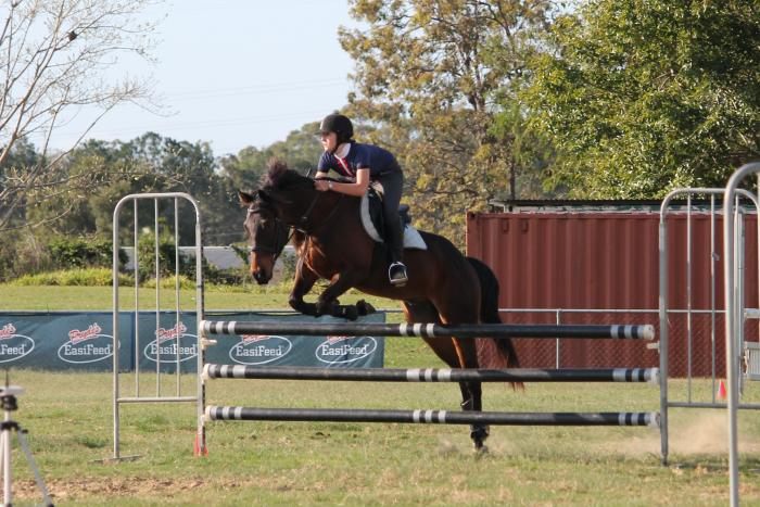 Great allrounder, trail,  pony club, showjumping