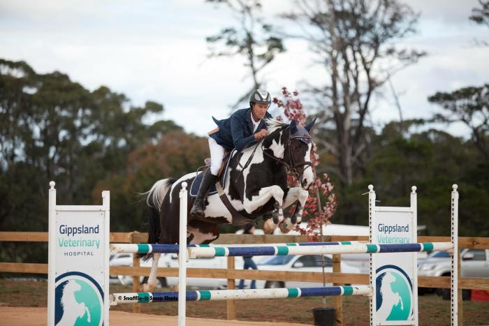 Stunning Talented Pinto Showjumping WB Mare