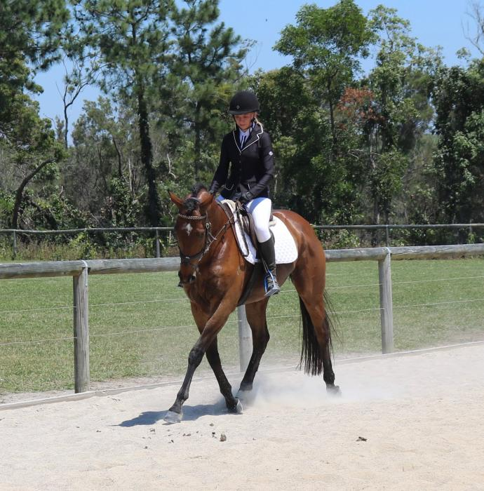 Eventing, Showjumping, Dressage or Show Horse!