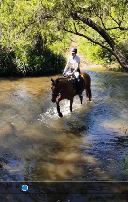 Super trail riding / pleasure horse