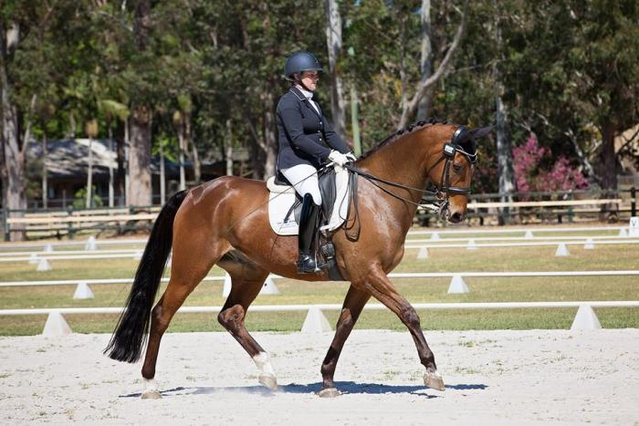 Advanced/ PSG Gelding for sale