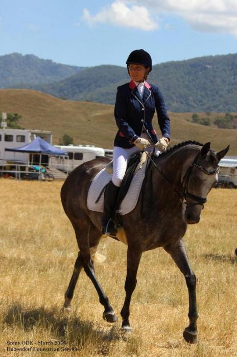 Stunning steal grey mare 5 year old