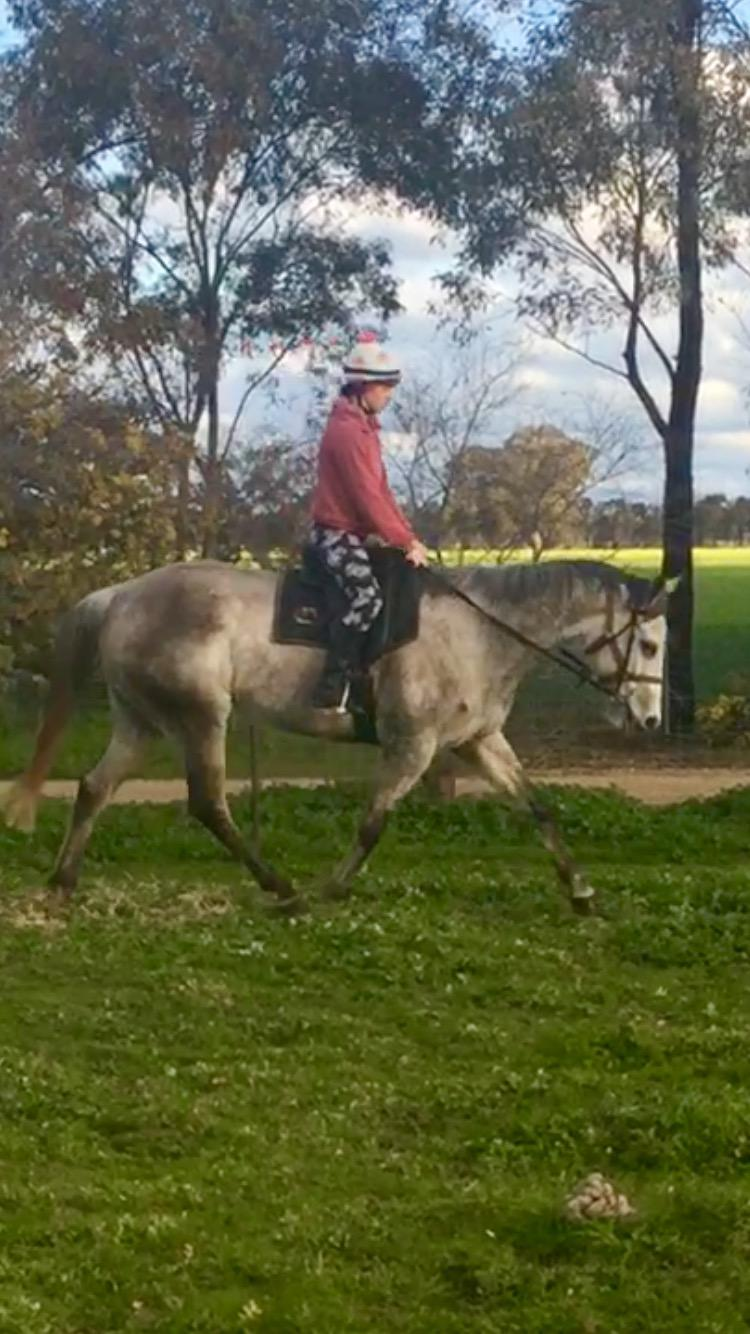 Off the track grey mare