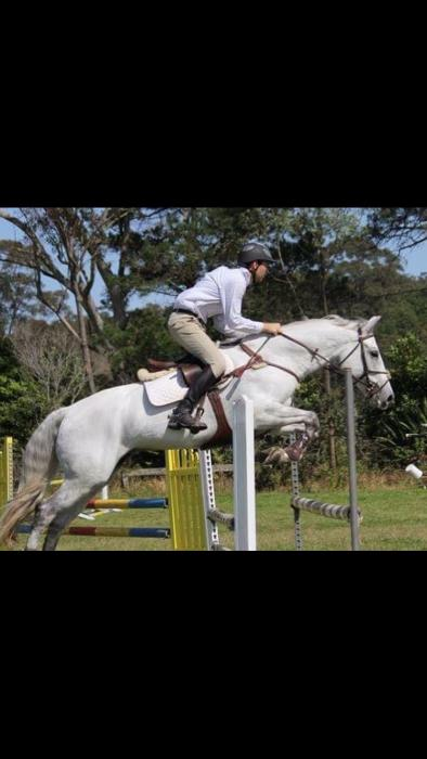 Serious ISH eventing prospect - Must be sold
