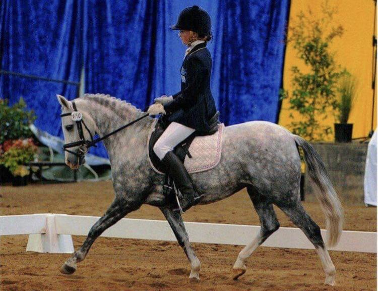 Ultimate Schoolmaster Dressage Pony