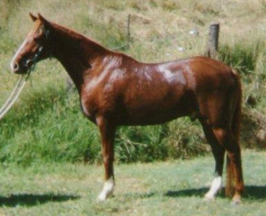 Golden Vale - by the same sire