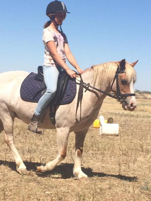 Competitive Childs Pony or Lead Rein
