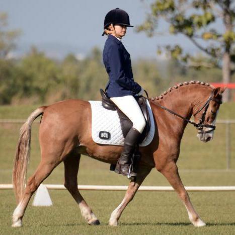 Quality Dressage & Show Pony