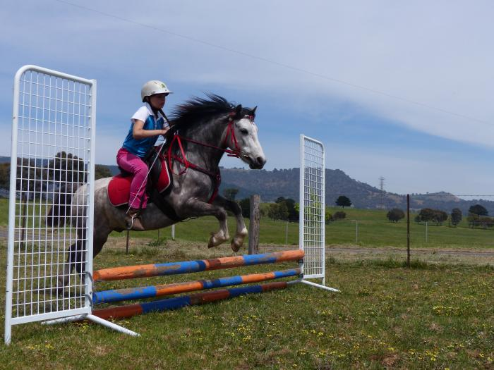 Awesome Kids Pony for any discipline.