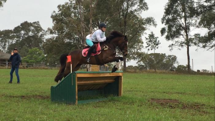 Top Allrounder Performance Pony for sale