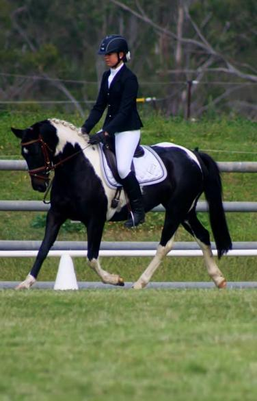 First ever competition at Sugarloaf cobbitty dressage. 2014. 2nd place in Preliminary