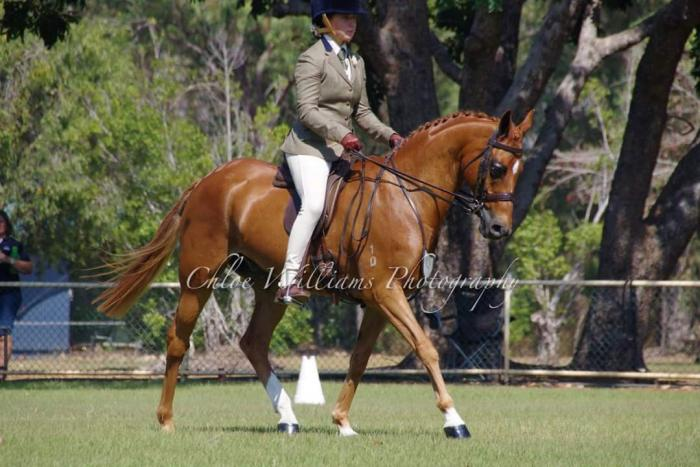 Experienced large hunter pony, GN Qualified