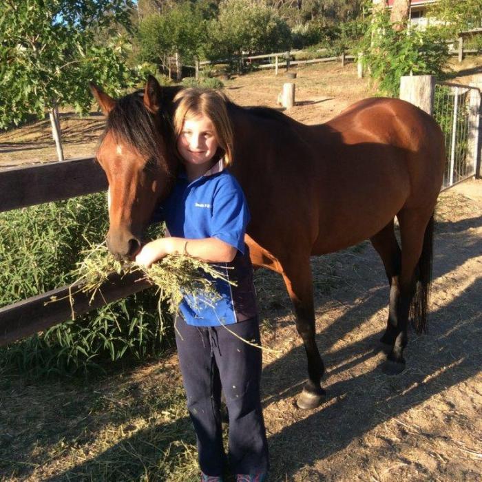 Reg Australian Riding Pony gelding