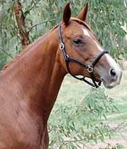 Dam of HB Beautiful Encounter for Sale (in foal)