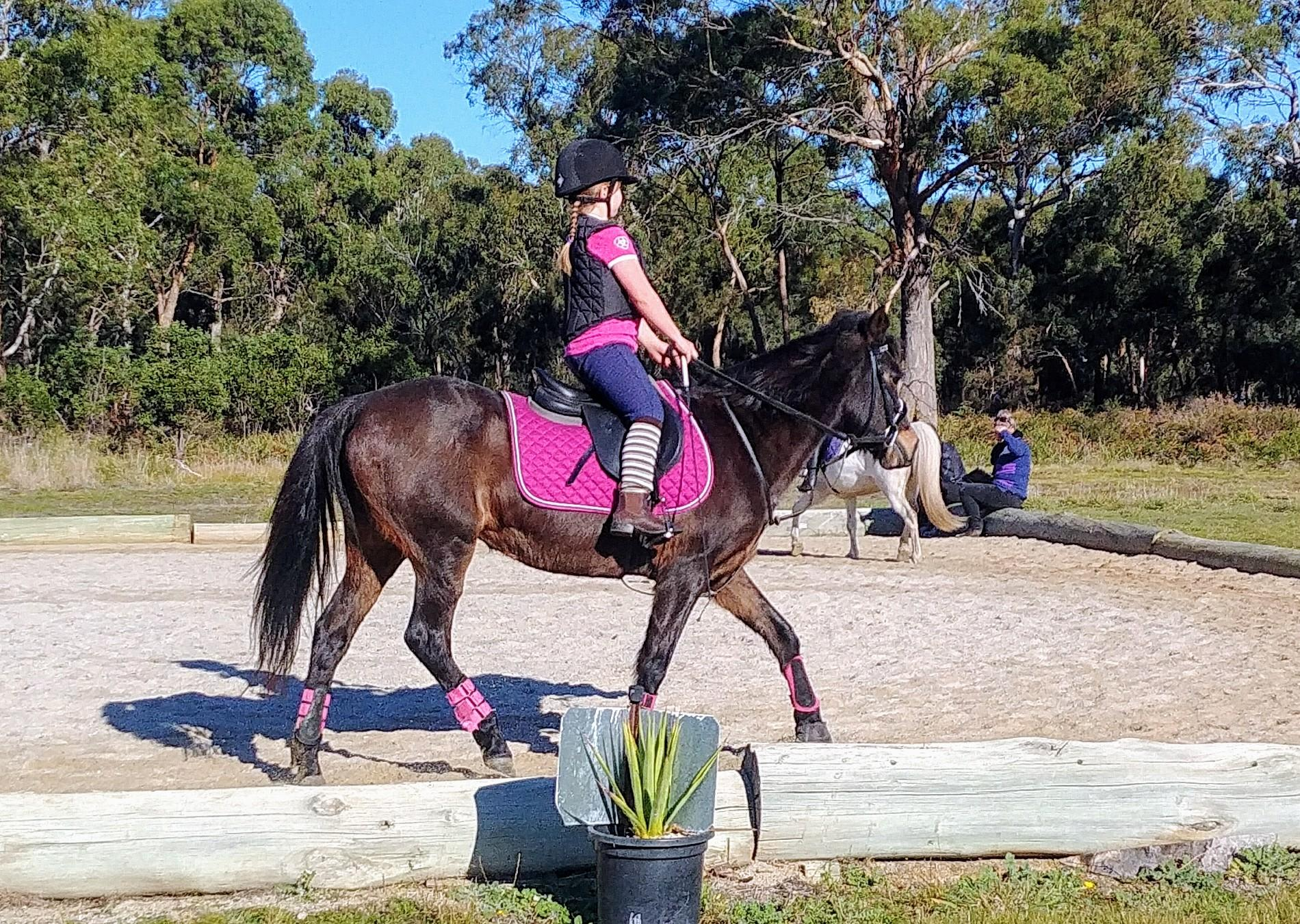 13.2hh 17 years old mare