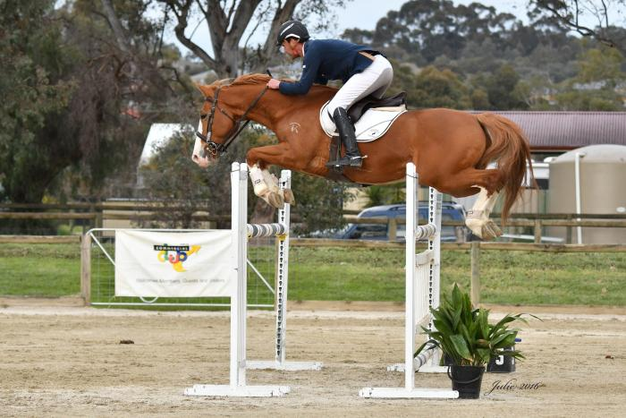 Super Competitive Show Jumping Warmblood