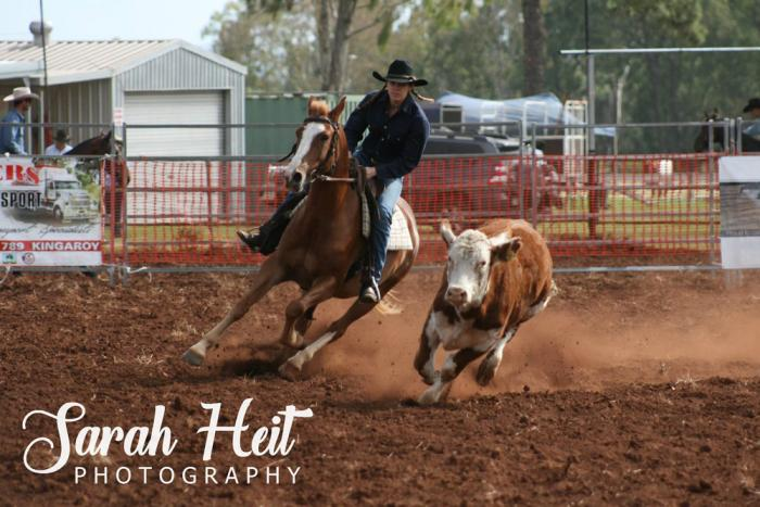 Talented young campdrafter - 5yo Heritage ASH