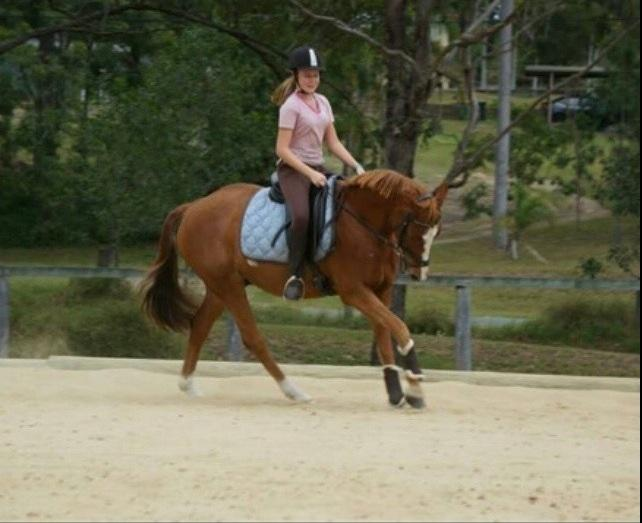 Beautiful chestnut gelding