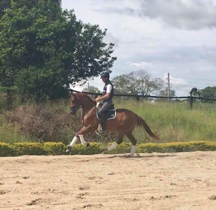 SUPER MOVING DRESSAGE HORSE