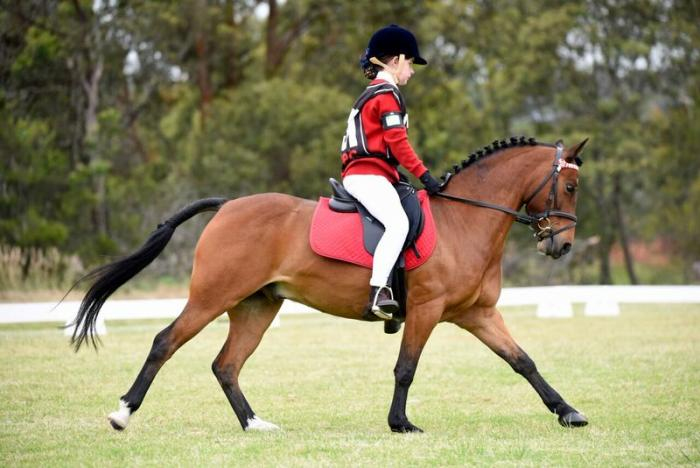 Beautiful Australian Pony