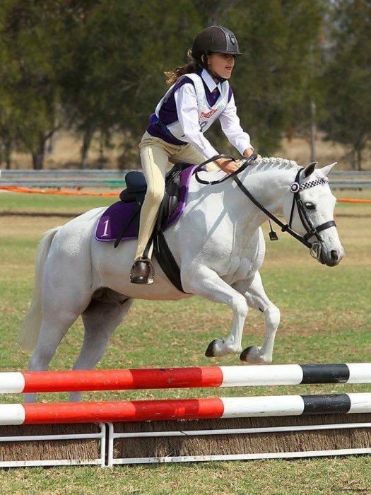 Super allrounder pony