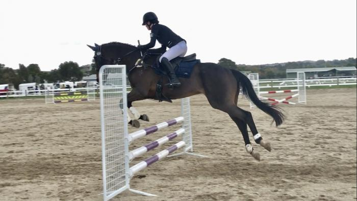 PRICE REDUCED- Lovely competition horse for sale!