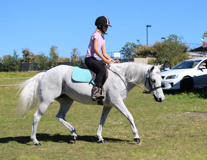 Australian Pony Mare. **VIDEO**REDUCED FROM $3800