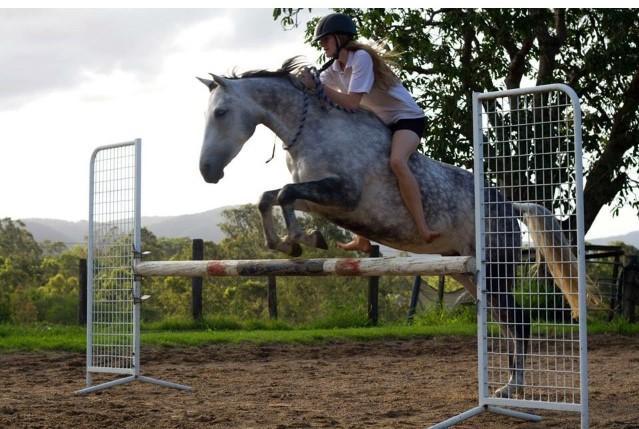 7 yo 14.2 ponyclub mare