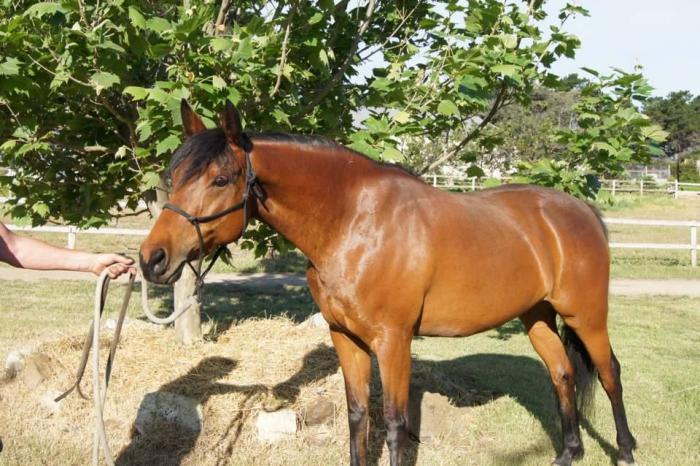 Flashy mare