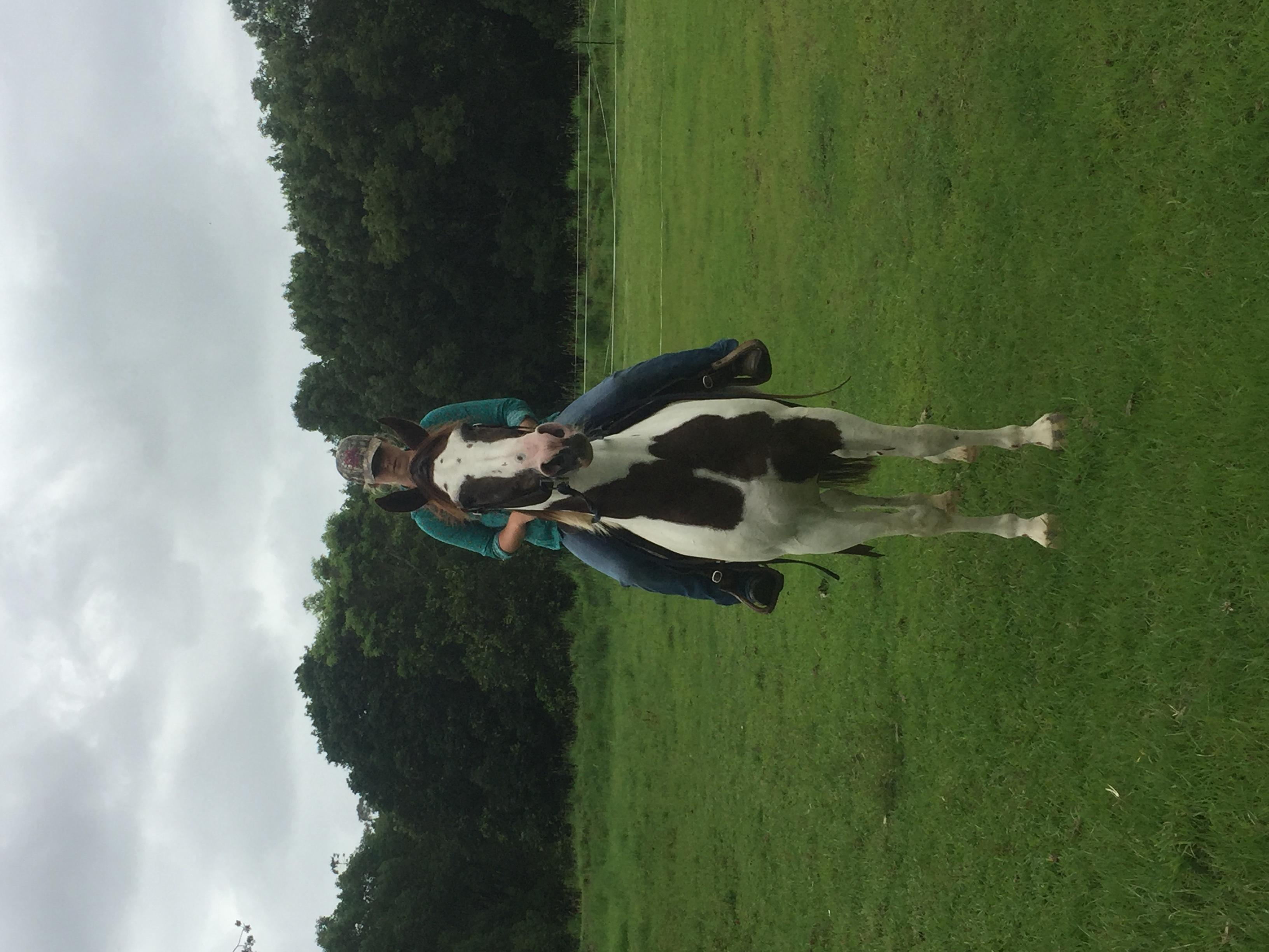 Sporting/ ponyclub/ cattlework /workhorse