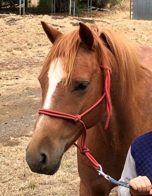 Forward moving pony 13hh 9yo