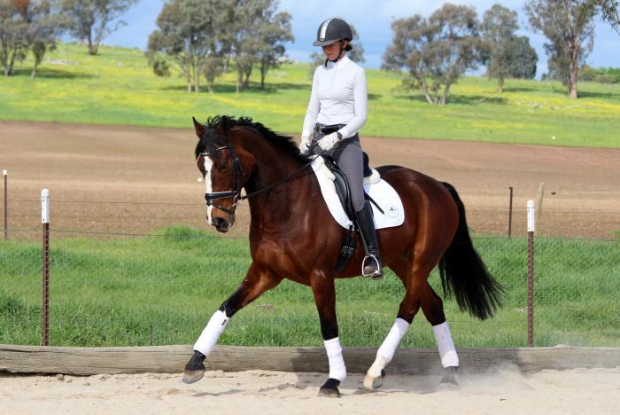 Lovely gelding training Elementary Dressage