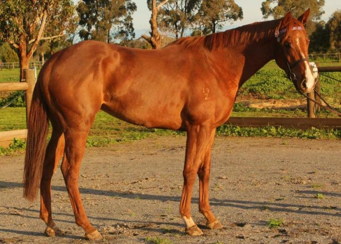 Sweet Natured Mare