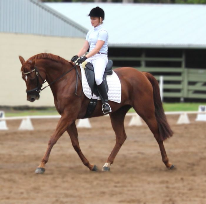 Paces and Temperament To Excel in Dressage