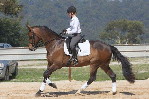 Experienced Dressage and Showjumping /1 * Eventer
