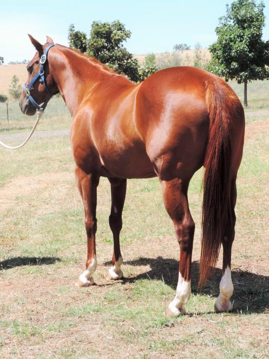 Peter Costello Quarter Horses currently has avail