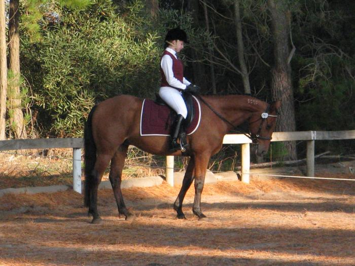 Been there Done That, Standardbred Gelding