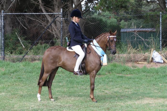 Dressage, Show, Interschool Pony Super Pretty