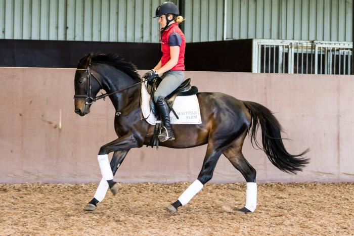 Very uncomplicated and talented dressage horse!