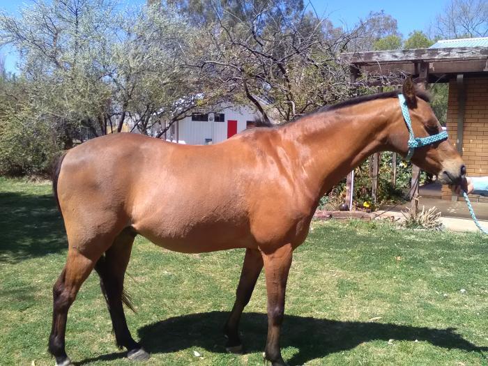 Quiet eye catching Riding Pony