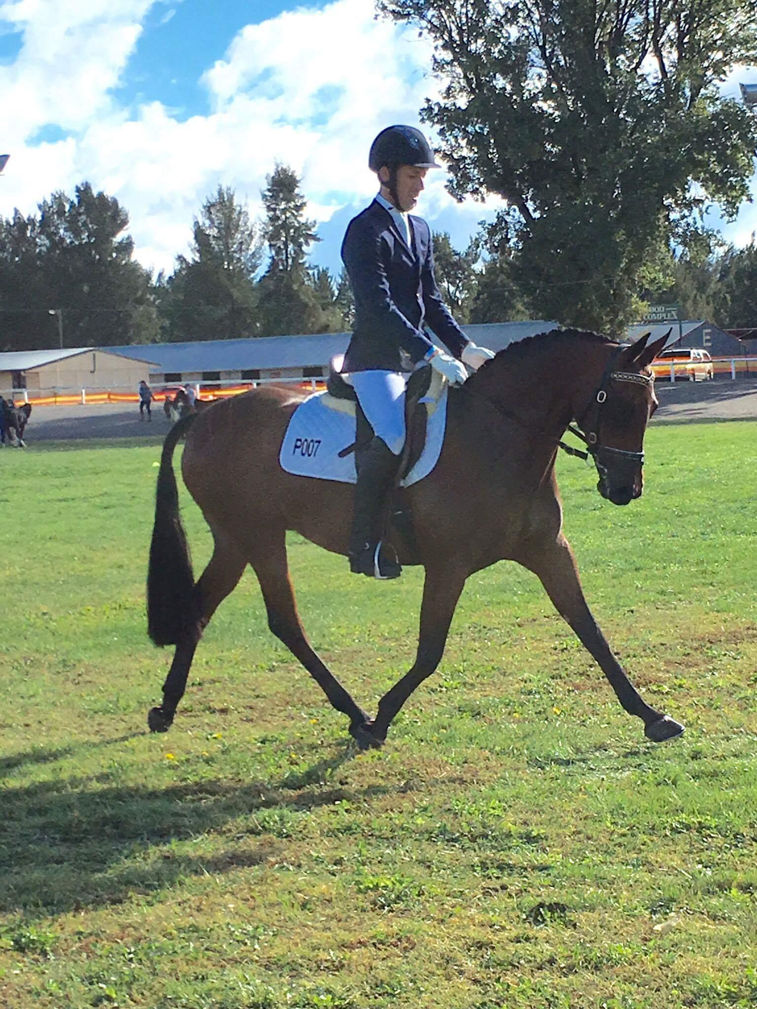 Dressage Pony/Show Hunter Galloway