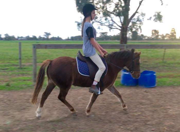 Australian Pony Mare - kids pony