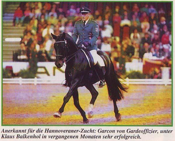 Garcon - ACE Group Stallion Service Auction