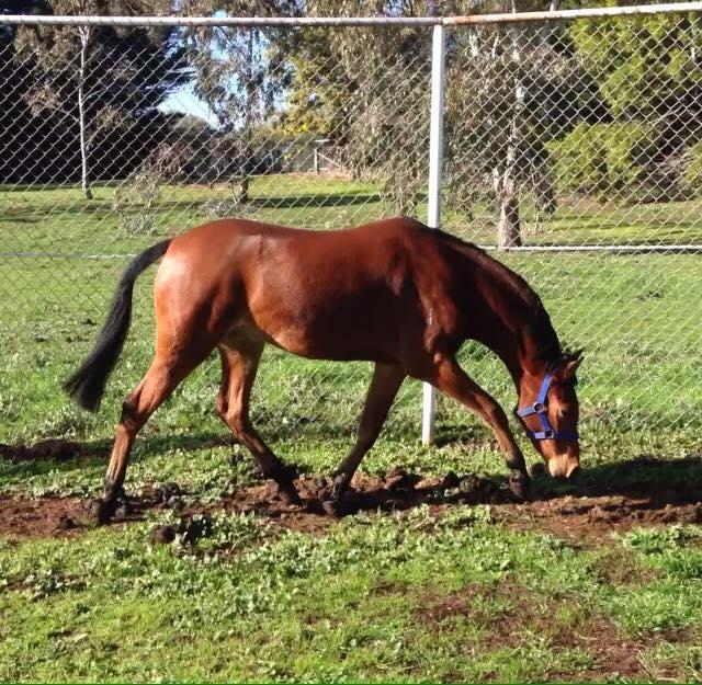 Future Child's Large Riding Pony